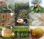 哪里批發薄皮核桃樹陜西榆林多少錢近期賣