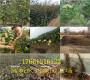 新闻咨询—浙江宁波卖的枣树好—共赢农业@有限公司