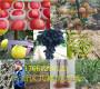 喜訊:浙江湖州哪里有新梨七號梨樹栽種技術