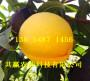 果農:江西上饒賣的2-3年新品種桃樹苗基地多少錢
