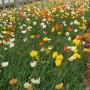 欢迎您金湖县木槿种子价格种子图片