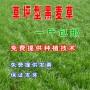 陕西商洛市包衣红三叶种子一斤多少钱江苏大洋种业