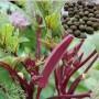 種子銷售克什克騰旗小區綠化草坪種子價格一畝地用幾斤