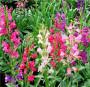 钦州市打造鸡冠花种子园区花海的价格