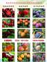 爱宕梨树苗一棵多少钱、爱宕梨树苗哪里批发