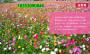通道紫花苜蓿种子直销