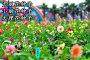 湖北隨州山烏桕種子種植方法來賓