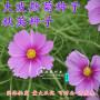 山東濟寧柏樹種子播種方法-中衛