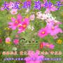 海南瓊海白三葉草坪種子種植技術-石嘴山