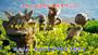 內蒙古錫林郭勒野苜蓿種子批發價格合理