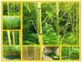 河南焦作解放3米高金鑲玉竹綠化樹