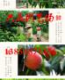 哪里有<梨树苗山西大同>种植基地多少钱卖的