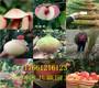 新闻:山东临沂2年大棚草莓苗才卖多少钱-共赢农业