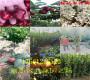 山东淄博售卖烟富苹果树多少钱《主产区》近期价格