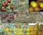 出售大棚葡萄樹苗畝產多少斤.大棚葡萄樹苗畝產多少斤