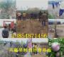 售价:广西南宁卖的8518核桃树有发展前景吗