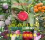 批发:安徽淮北卖的美国大樱桃树亩产多少斤
