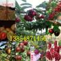 新聞:河南駐馬店附近紅梨樹才賣什么價格【共贏】農業