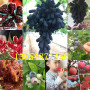 黑龙江大兴安岭地新品种纸皮核桃树有发展前景吗