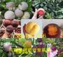 產區:阿勒泰地大棚櫻桃樹有發展前景嗎