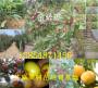 产区:山西?#39034;?#38470;地草莓苗要卖多少钱一棵