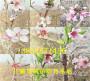 果樹:遼寧鐵嶺賣的雪桃樹苗多少錢賣一棵