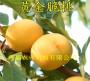 5月成熟桃苗在河北衡水多少钱卖一棵@共赢农业基地