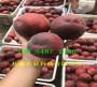 产地:广西梧州卖的晚熟桃树苗品种介绍