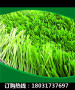 新闻-巴青绿化塑料草使用年限!浔阳资讯