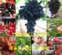 哪有—山東威海金秋紅蜜桃樹苗一畝土地種植多少棵【共贏】農業