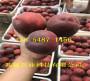 早熟桃樹苗哪里批發_湖北黃石早熟桃樹苗哪里有出售的