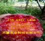 农业@内蒙古包头雪桃树苗此处多少钱卖