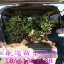 咨詢:忻州求購藍莓苗@種植技術@航遠苗木