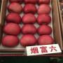 《报价信息》维纳斯黄金苹果苗今年价格、3公分苹果树苗多少钱【价格】