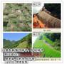 淮安马鞭草种种子一般多少钱零售