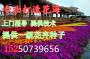 金昌茼蒿菊种子啥价格一斤
