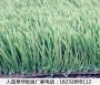 融安人工草坪生产厂家最近这么火【股份@有限公司】