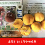 昌黎甜桃品种
