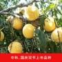 的晚熟品种桃有哪、桃树苗价格优惠、优惠价格