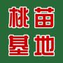 莆田桃树品种大久保几月成熟、种植基地、哪里有出售