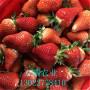 明宝草莓苗简介、明宝草莓苗基地直销