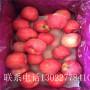 烟富8号苹果树苗、烟富8号苹果树苗购买多少元