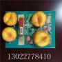 2020年瑞蟠21蟠桃樹苗多少錢一棵、瑞蟠21蟠桃樹苗圖片