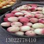 金苹美桃树苗确切价格、金苹美桃树苗哪里好
