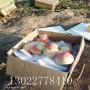 夏甜桃樹苗怎麽賣、夏甜桃樹苗圖片