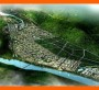 今日报价:安阳林州周边概念性规划设计方案资深写公司