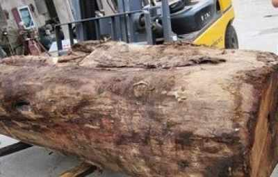 径缅甸花梨木2吨