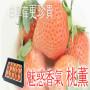 頭條:寶交早生草莓苗報價/價格  新聞:新野縣寶交早生批發草莓苗價格