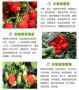 頭條:賽娃草莓苗報價/價格  新聞:尋烏縣賽娃草莓苗價格行情