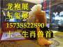 贵州龙袍展玉玺展租赁出租24小时在线电话畅通